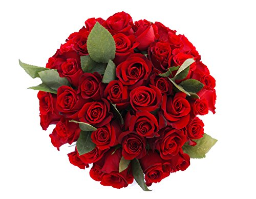50 Valentines Day Farm Fresh Red Roses Bouquet By justFreshRoses | Long Stem Fresh Red Rose Delivery