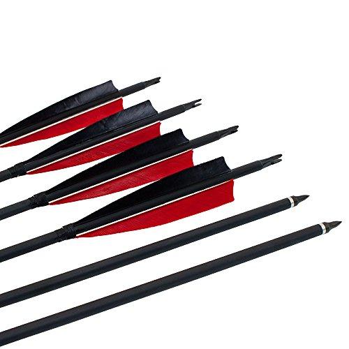 50 Lb Arrow - 8