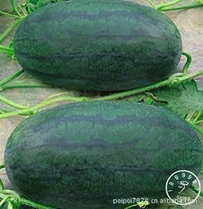 PLAZO !! 50 PC / bolso Semillas de sandía gigante Negro Tyrant King Super dulce sandía cultivar un huerto casero, # 8QWR5I
