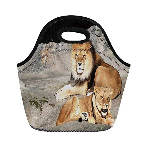 Zoo Durable Lunch Bag,Male and Female Lions Basking in the Sun Wild Cats Habitat King of Jungle for School Office,11.0
