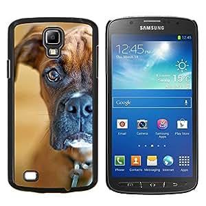 TECHCASE---Cubierta de la caja de protección para la piel dura ** Samsung Galaxy S4 Active i9295 ** --Boxer fijamente Shorthair Brown Dog