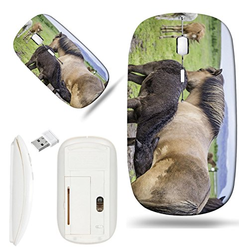 Luxlady Wireless Mouse White Base Travel 2.4G Wireless Mice with USB Receiver, 1000 DPI for notebook, pc, laptop,mac design IMAGE ID: 34171623 An Icelandic horse with her newborn foal
