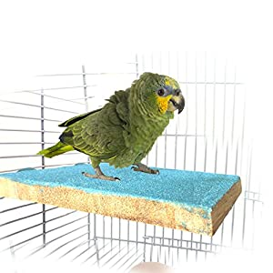 BWOGUE Colorful Bird Perch Stand Platform,Natural Wood Paw Grinding Bird Cage Perch for Parrot Parakeet Hamster Gerbil Cages Toy 107