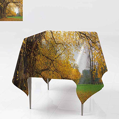 AndyTours Spill-Proof Table Cover,Fall,Autumnal Park with Big Ancient Oak Tree and Deciduous Leaves Greenery,Party Decorations Table Cover Cloth,60x60 Inch Earth Yellow Brown ()