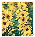 California Sunflower Seeds