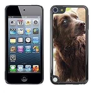 Just Phone Cover Etui Housse Coque de Protection Cover Rigide pour // M00139940 Familia del perro Brown Brown Dog Blue // Apple ipod Touch 5 5G 5th