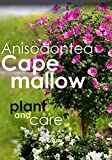 How to Grow and care of Anisodontea (Cape mallow) : Charming South African shrub
