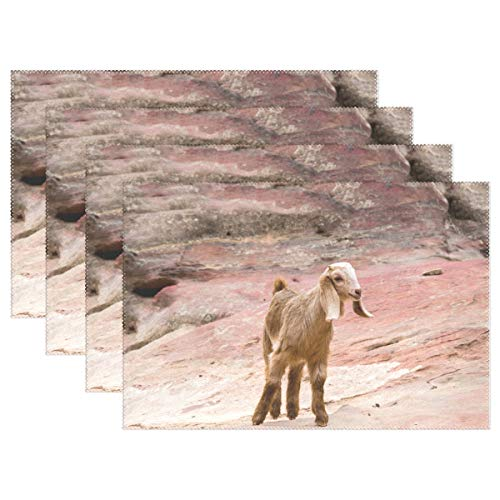 - Fengye Placemats Animal Rock Goat Kitchen Table Mats Resistant Heat Placemat for Dining Table Washable 12