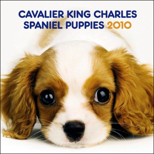 Cavalier King Charles Spaniel Puppies 2010 Mini Wall