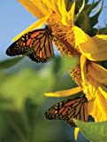 Butterfly Sunflower Blank Journal, Nodin Press, 1935666401
