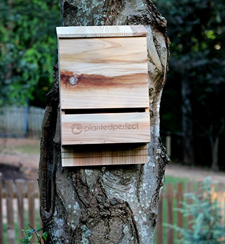 The 8 best bat houses