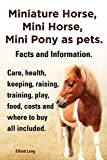 Miniature Horse, Mini Horse, Mini Pony as
