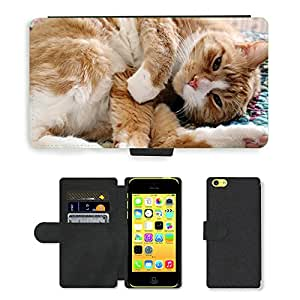 Hot Style Cell Phone Card Slot PU Leather Wallet Case // M00117457 Cat Pet Animal Domestic Relaxed // Apple iPhone 5C