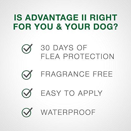 Bayer Advantage II Topical Flea Treatment Dogs by Bayer Animal Health (Image #5)