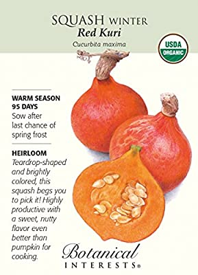 Organic Red Kuri Winter Squash Seeds - 2 grams