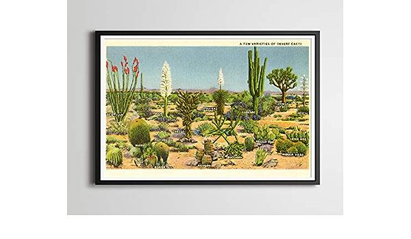 Hobart dfgrwe Mexican Cactus Skull Print