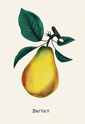 Buyenlarge Bartlett Pear - 16