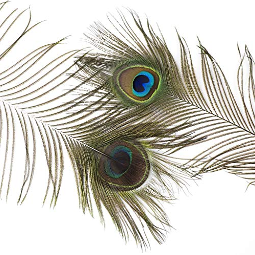Natural Long Peacock Eye Feathers - 25-35