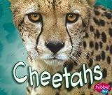 Cheetahs, Deborah Nuzzolo, 1429648783