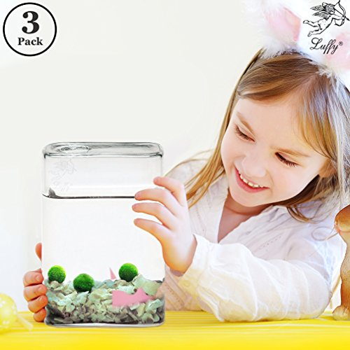 "Luffy Pet Plant for All Ages – 3 (0.5"") Nano Marimo Moss Balls – Friendly, Compact & Low Maintenance Aquatic Pet – Lifelong Friend – Ideal for children or adults with busy schedule or little space"