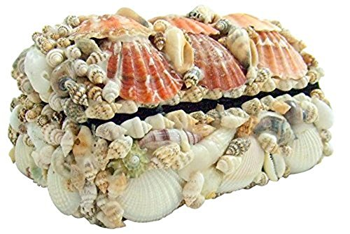 Westman Works Gifts Real Natural Seashell Jewelry Trinket Box Nautical Sea Shell Beach Home Decoration Gift 6 Inches Long (Gift Seashell)
