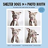Shelter Dogs in a Photo Booth 2017 Wall Calendar by Guinnevere Shuster (2016-06-07)