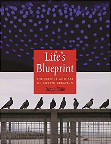 Lifes blueprint the science and art of embryo creation lifes blueprint the science and art of embryo creation 1st edition malvernweather Choice Image