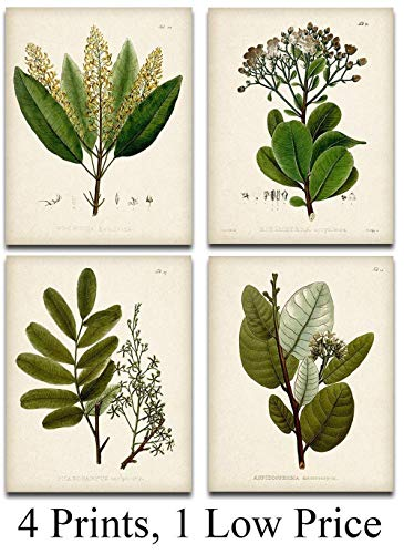 Green Botanical Illustrations - Set of Four Prints (8x10) Unframed - Great Kitchen Decor and Gift Under $20 for Nature Lovers