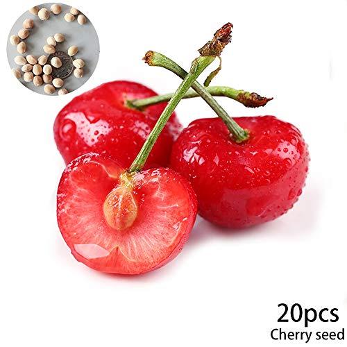 Cotowin Asien Sweet Black Tartarian Cherry Tree Seeds - 20 Cherry Seeds - Exclusive ()