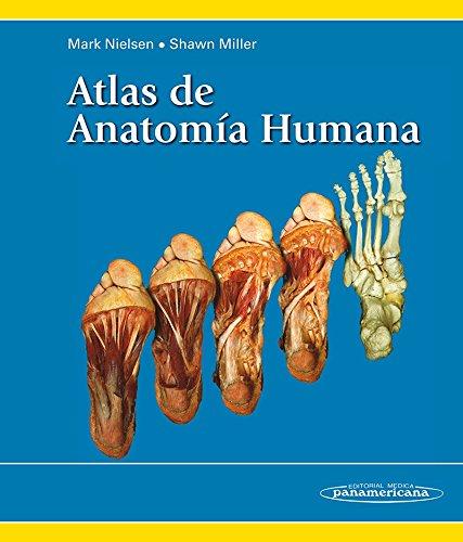Rakefeco Descargar Atlas De Anatomía Humana Mark Nielsen Pdf