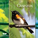 Oiseaux: Ambiance Nature