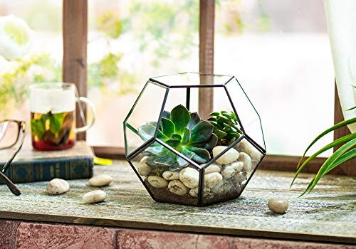 Mkono 3 Packs Mini Glass Geometric Terrarium Container Modern Tabletop Planter Window Sill Decor DIY Display Box Centerpiece Gift for Succulent Fern Moss Cacti Air Plants Miniature Fairy Garden, Gold