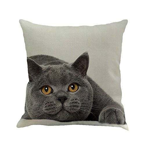 Clearence Home Pillowcase KpopBaby Cat Square Decoration Car Sofa Bedroom Cushion Cover ()
