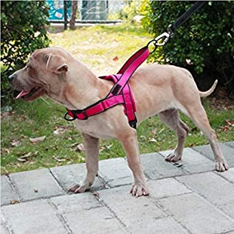 ZIMO Arneses para Perros Fácil de Colocar y Apagar Perros medianos ...