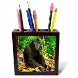 3dRose Danita Delimont - Primates - Indonesia, Sulawesi. Crested black macaque relaxing in rainforest. - 5 inch tile pen holder (ph_257190_1)