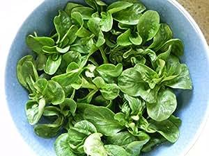 corn salad (papel maché) 100semillas * overwinter *