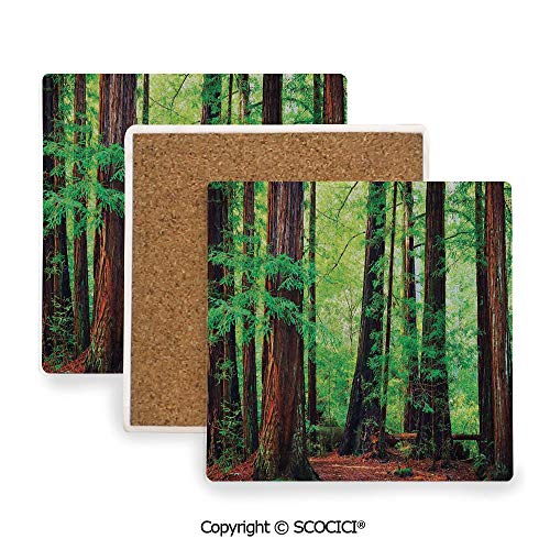 - Ceramic Coaster With Cork Mat on the back side, Tabletop Protection for Any Table Type, Square coaster,Woodland Decor,Redwood Trees Northwest Rain Forest Tropic,3.9