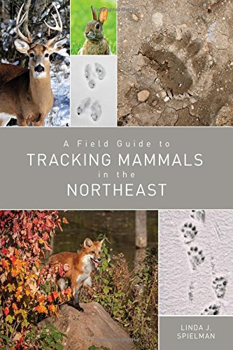 Download A Field Guide to Tracking Mammals in the Northeast pdf
