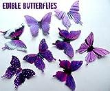 24 Purple Small 1.75