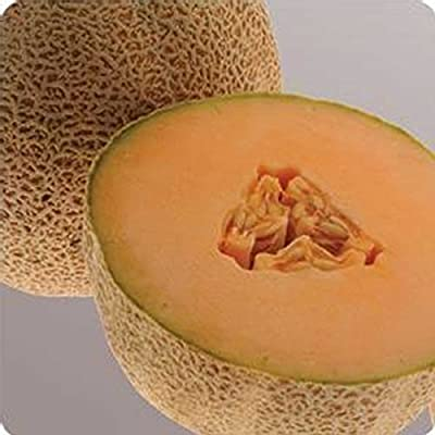 Cantaloupe Melon Garden Seeds - Ball 2076 Hybrid - Non-GMO, Vegetable Gardening Seeds - Fruit