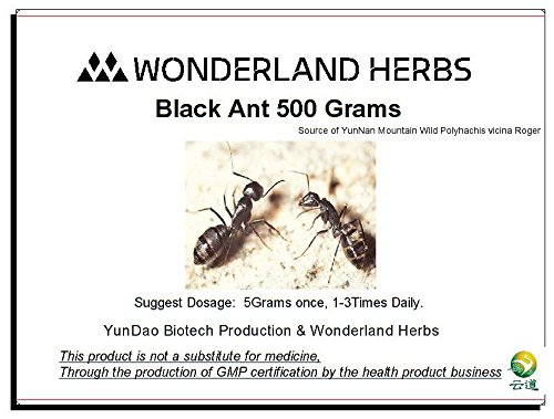 WonderLand Herbs UNADULTERATED 500Grams (1.1 LB) Wild Mountain POLYRACHIS ANT/ polyrhachis vicina EXTRACT Powder, ≥1.5% formic acid by JIA (WonderLand Herbs)