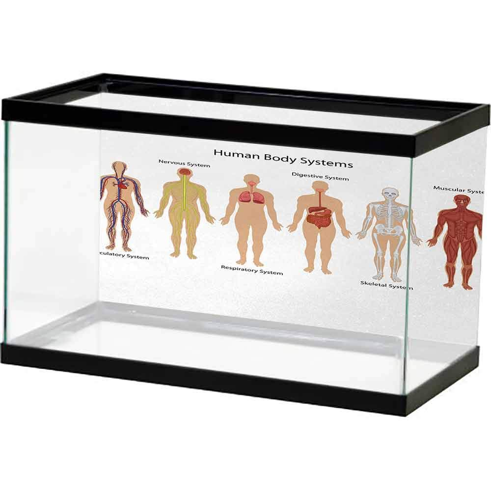 bybyhome Fish Tank Wall Human Anatomy,Human Body with Central Nervous Network Skeleton and Neurons Image Muscle System,Multi 3D One Side Fish Tank by bybyhome