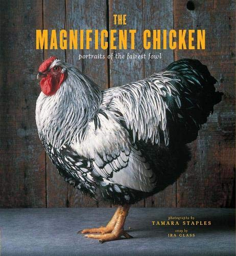 The Magnificent Chicken: Portraits of the Fairest Fowl by Tamara Staples, Christa Velbel