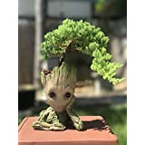 Bonsai Tree Pot Baby Groot (Bonsai Pot)