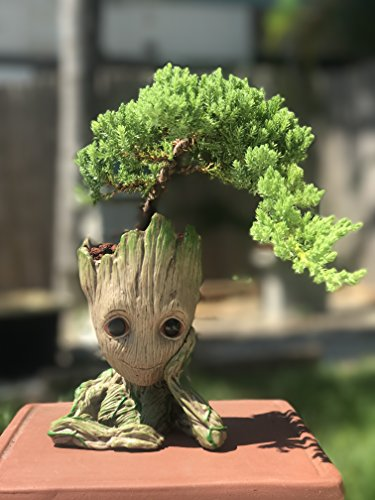 Bonsai Tree Pot Baby Groot (Thinking Groot) Succulent pot - Cactus pot- Pen Holder- Make up Brush holder -Great Quality and Extremely Detailed -Durable Resin- Won