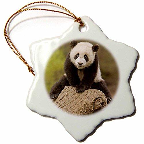Wolong Panda Reserve China - 3dRose ORN_70238_1 China, Wolong Panda Reserve, Baby Panda Bear on Stump-AS07 AGA0001-Alice Garland-Snowflake Ornament, Porcelain, 3-Inch