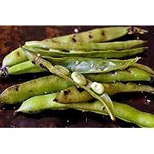 BEAN, FAVA WINDSOR BUSH, HEIRLOOM, ORGANIC 100 SEEDS, NON-GMO, BUTTERY N HEALTY BEANS