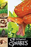 Slithering Snakes, Sarah Creese, 1848796897