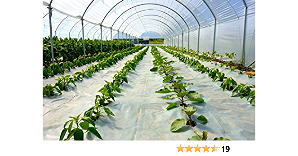 VEVOR Greenhouse Film Greenhouse Polyethylene Film 10x25 ft 6 Mil Plastic Cover