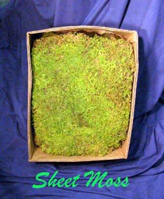 Sheet Moss bulk Big 1.5 cubic foot box by Moss4U
